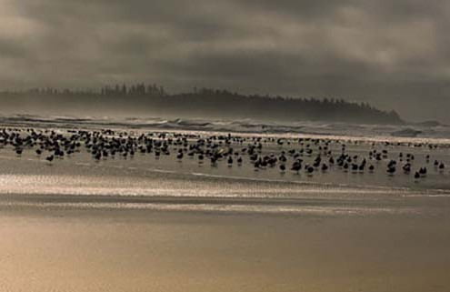tofino-is-a-bird-watching-paradise
