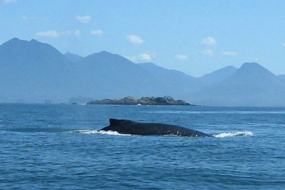 Whale watching in Tofino and Ucluelet