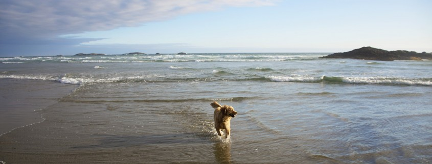 Vancouver Dog Friendly Accommodation