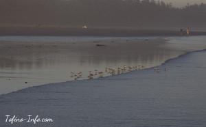 Birds-LongBeach_w